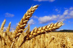 Земјоделство
